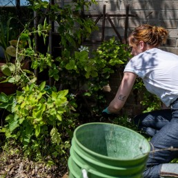 Jaime Calder removes weeds from a blackberry patch in her vegetable garden in Round Rock, Texas, amid the coronavirus disease (COVID-19) spread in the U.S., April 7, 2020. REUTERS/Sergio Flores