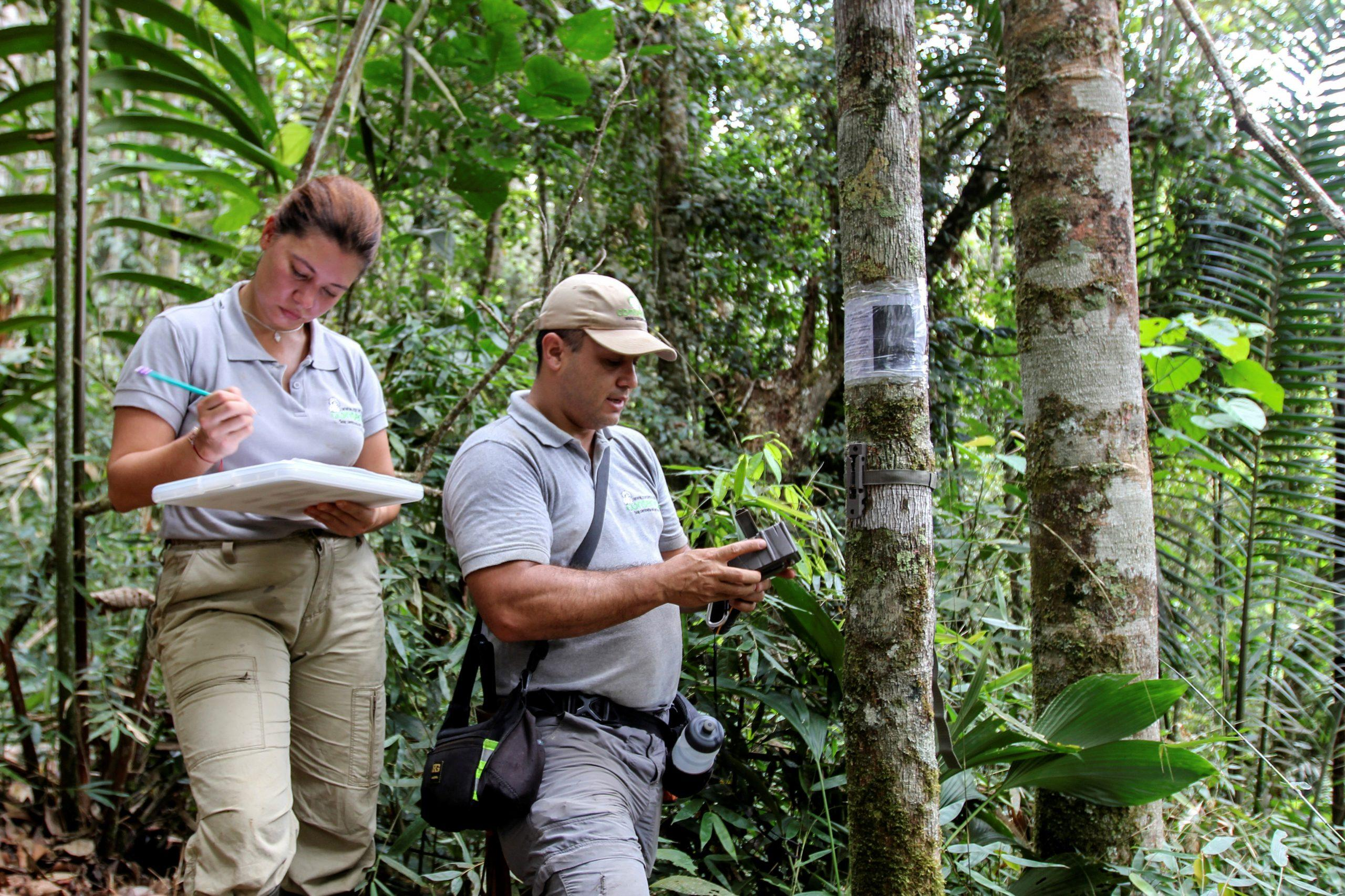 Caffeinated conservation: Colombian farmers switch coca for coffee to protect wildlife - GLOBAL HEROES MAGAZINE