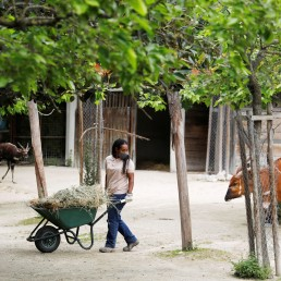 Zookeeper Estefania gives food to the bongos at the Lisbon Zoo as the spread of the coronavirus disease (COVID-19) continues, in Lisbon, Portugal April 23, 2020. REUTERS/Rafael Marchante