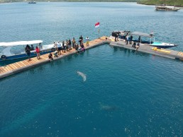 Bottlenose dolphins Johnny and Dewa are seen at the Bali Dolphin Sanctuary rehabilitation centre, a project initiated by Bali provincial government and operated by Ric O'Barry's dolphin project team, in Buleleng, Bali, Indonesia October 8, 2019. Courtesy of Ric O'Barry's DolphinProject.net/Handout via REUTERS
