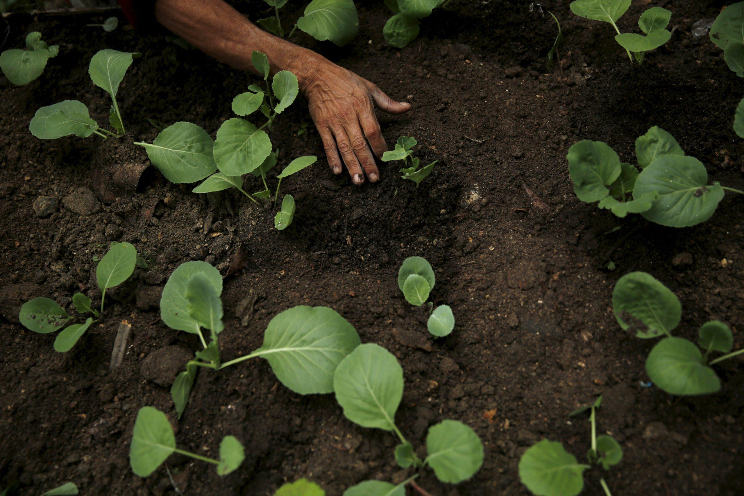 Latin America urged to boost green jobs for pandemic recovery - GLOBAL HEROES MAGAZINE