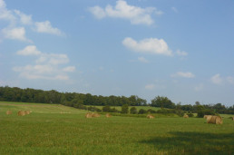 Grass field with hay