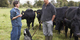 Farmer In Discussion With Vet In Field