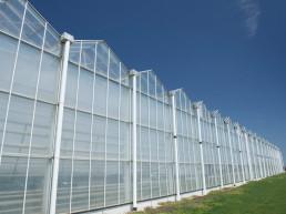 003 Greenhouse