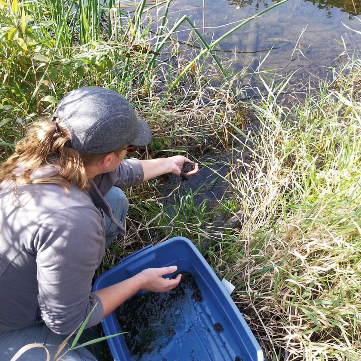 WPC lead biologist releasing Oregon spotted froglets in BC. Photo: WPC.