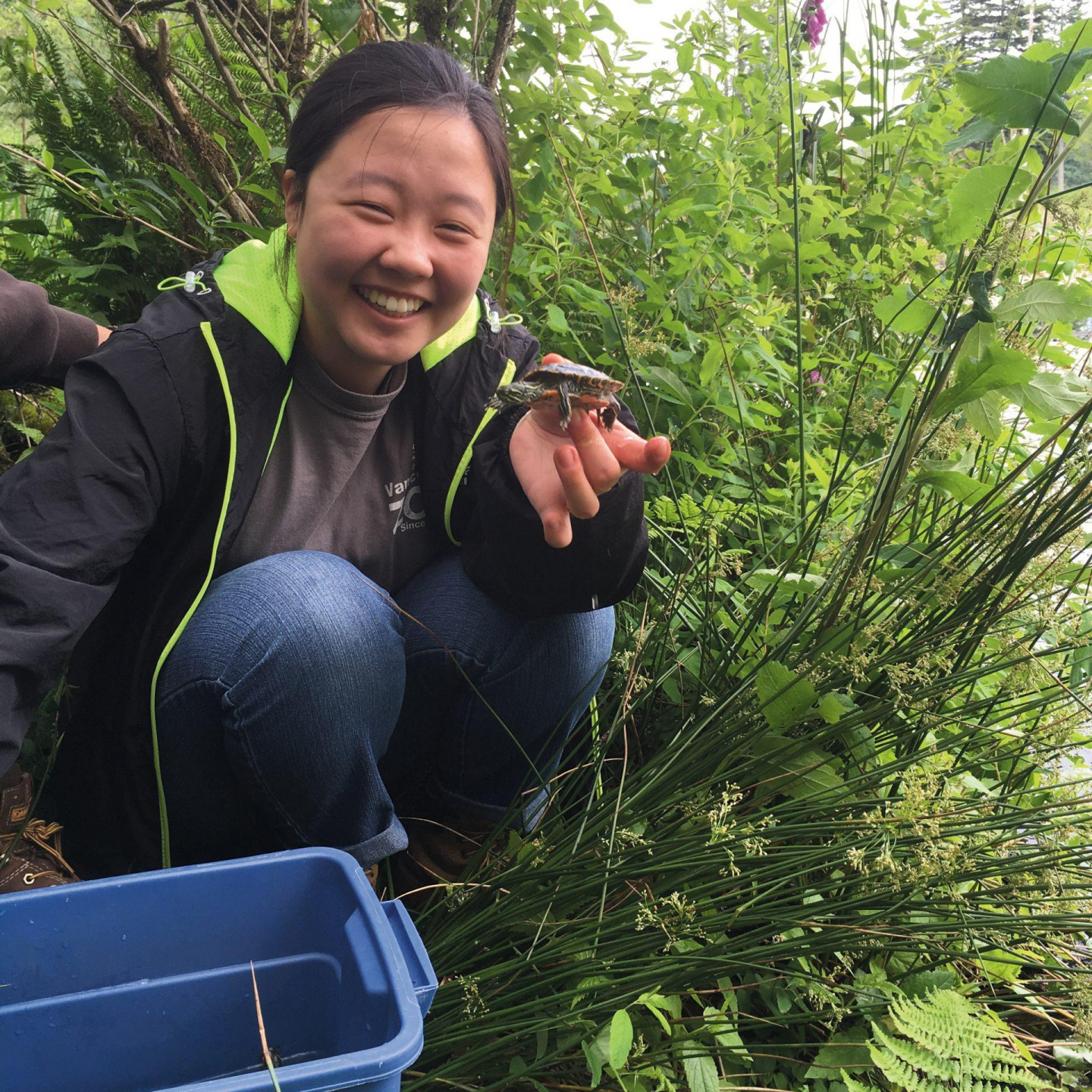 WPC volunteer releasing young western painted turtles in BC. Photo: Lance Woolaver.