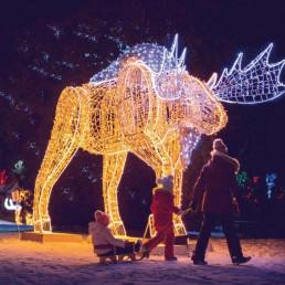christmas lights, moose, kid on sled
