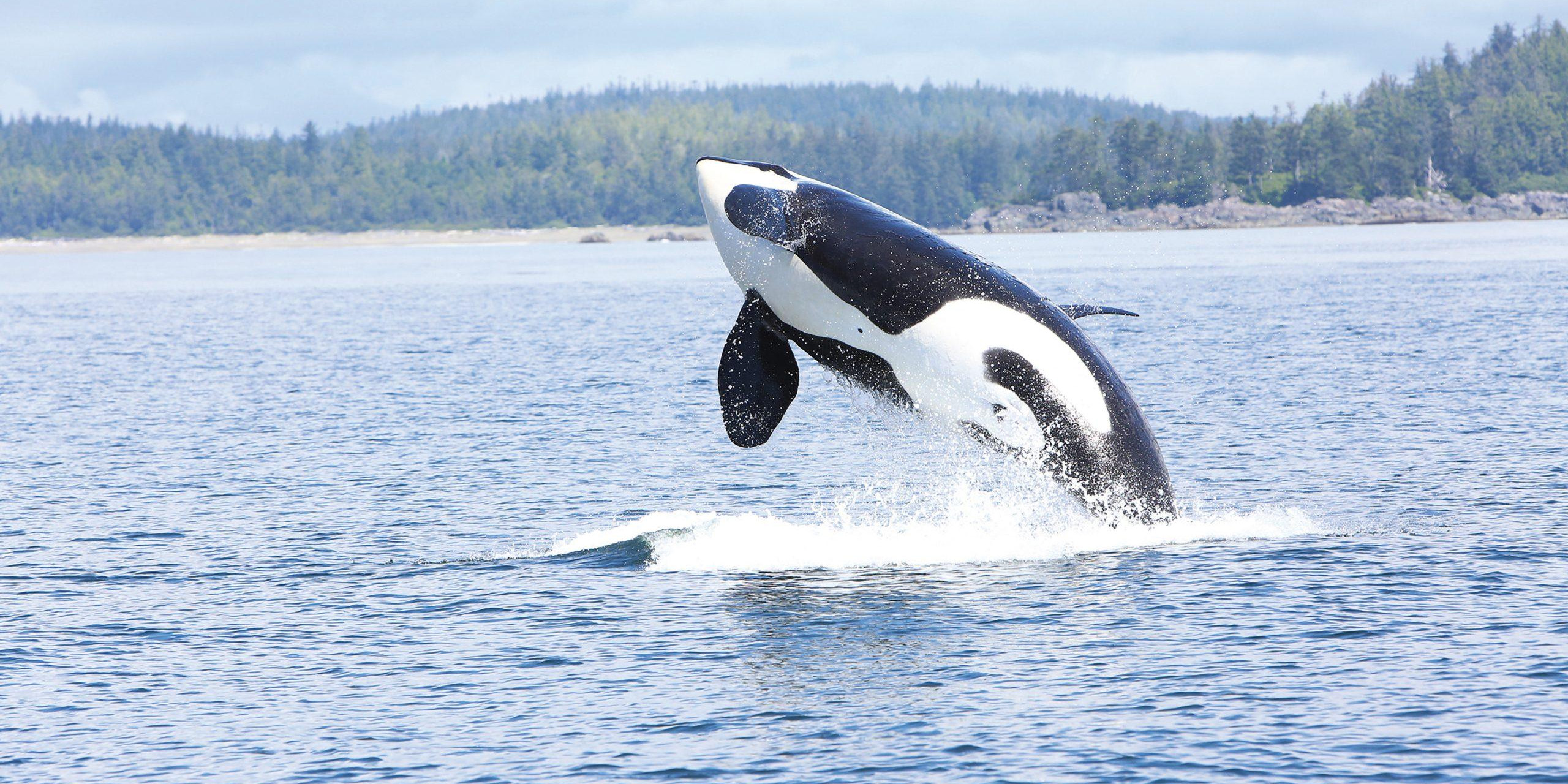 marine life conservation and protection, whale