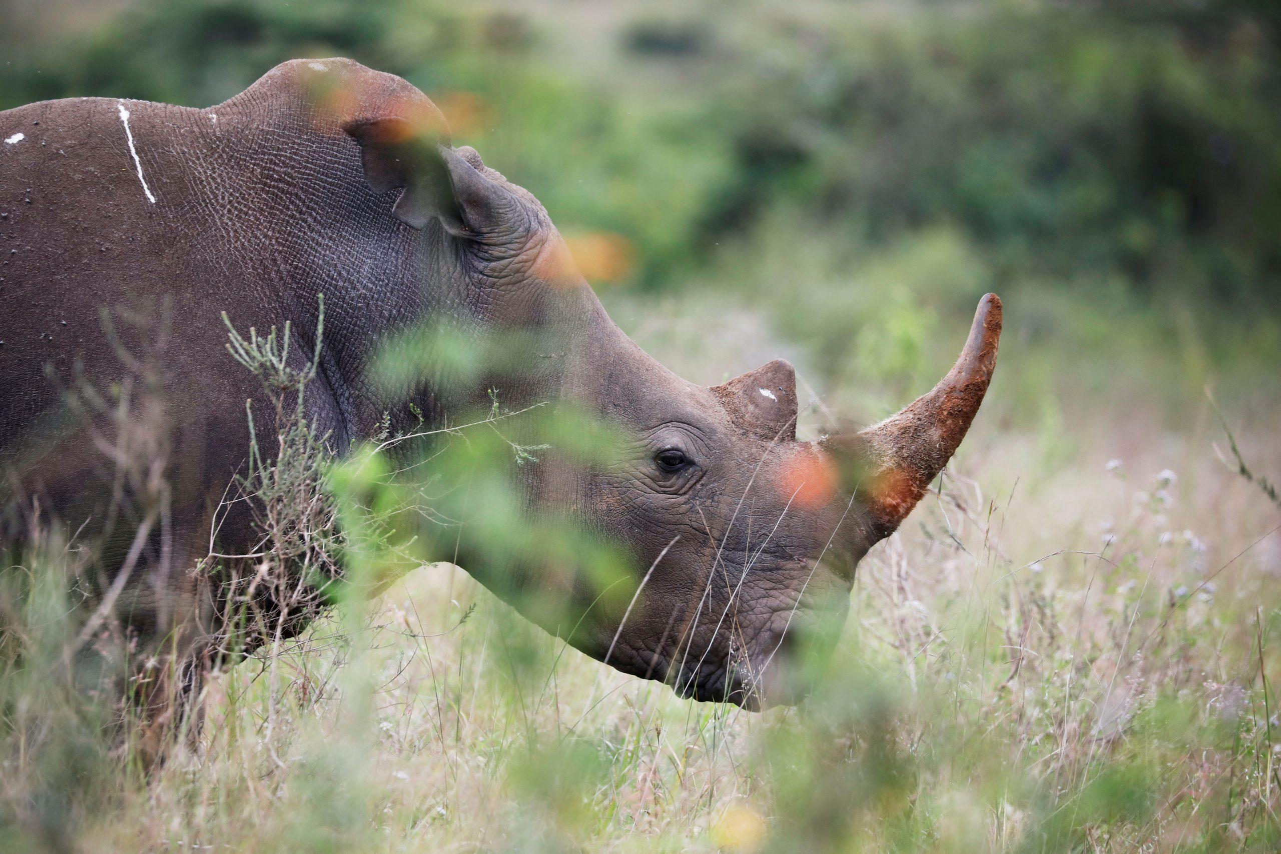 Namibia sees steady downward trend in rhino and elephant poaching