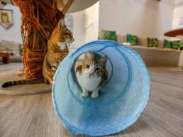 cat cafe stray cats dubai adoption