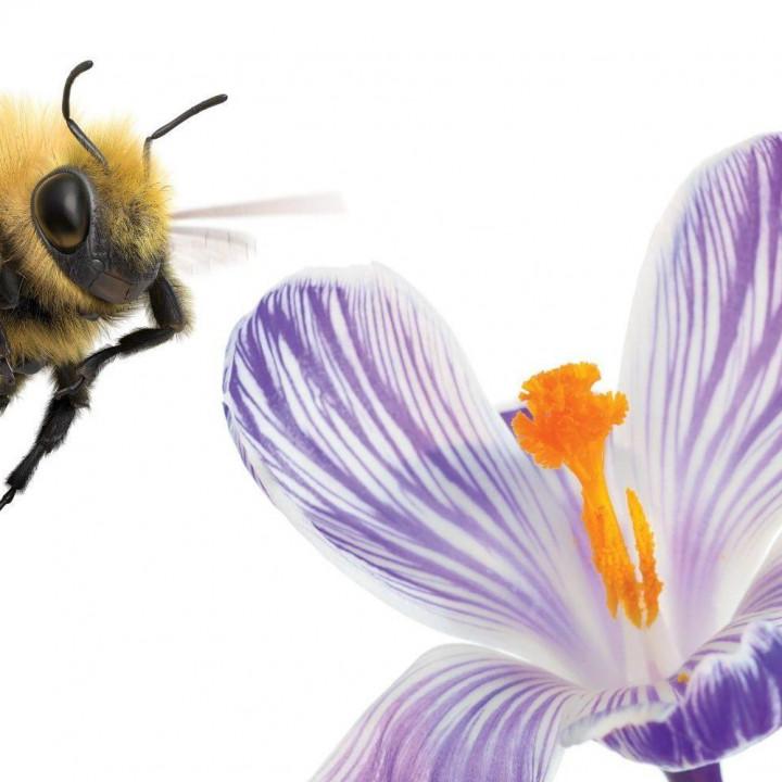 telus pollinator fund social impact global change global impact