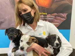 bideawee animal adoption cat adoption pandemic