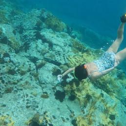 carol reef caribbean sea sea level restoration technology