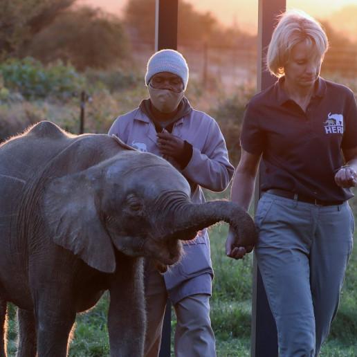 khanyisa elephant HERD elephant poaching albino elephant beats the odds