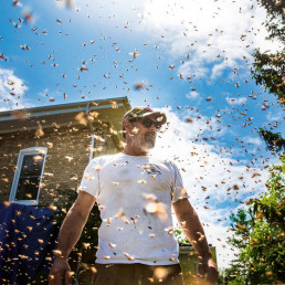 ontario bee rescue queen bee bee hive meadowlily farm