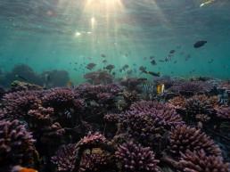 coral reef reef stars coral growth bali