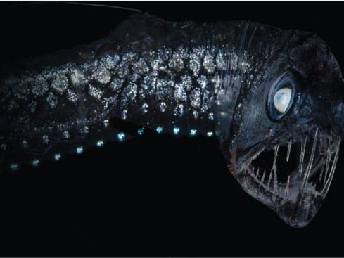 ocean twilight zone ocean weird creatures creatures