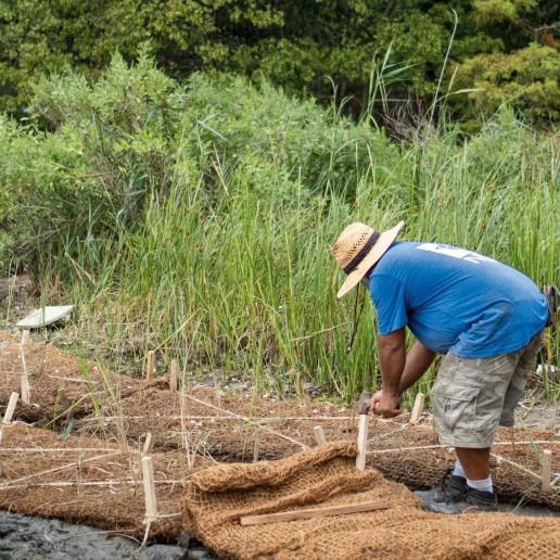 NYRP bette midler wetlands new york restoration project
