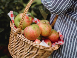 002-GHN - Apple Picking