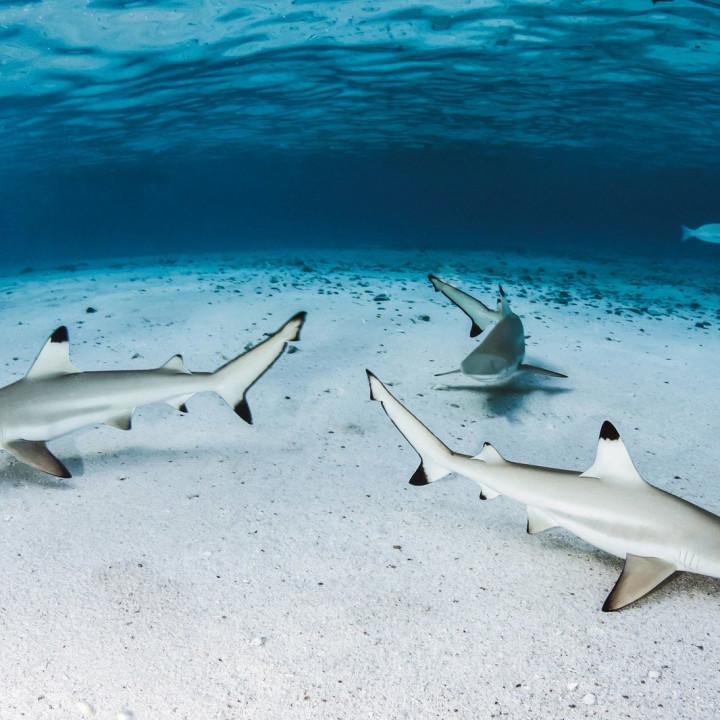 Sea life in West Papua, Indonesia