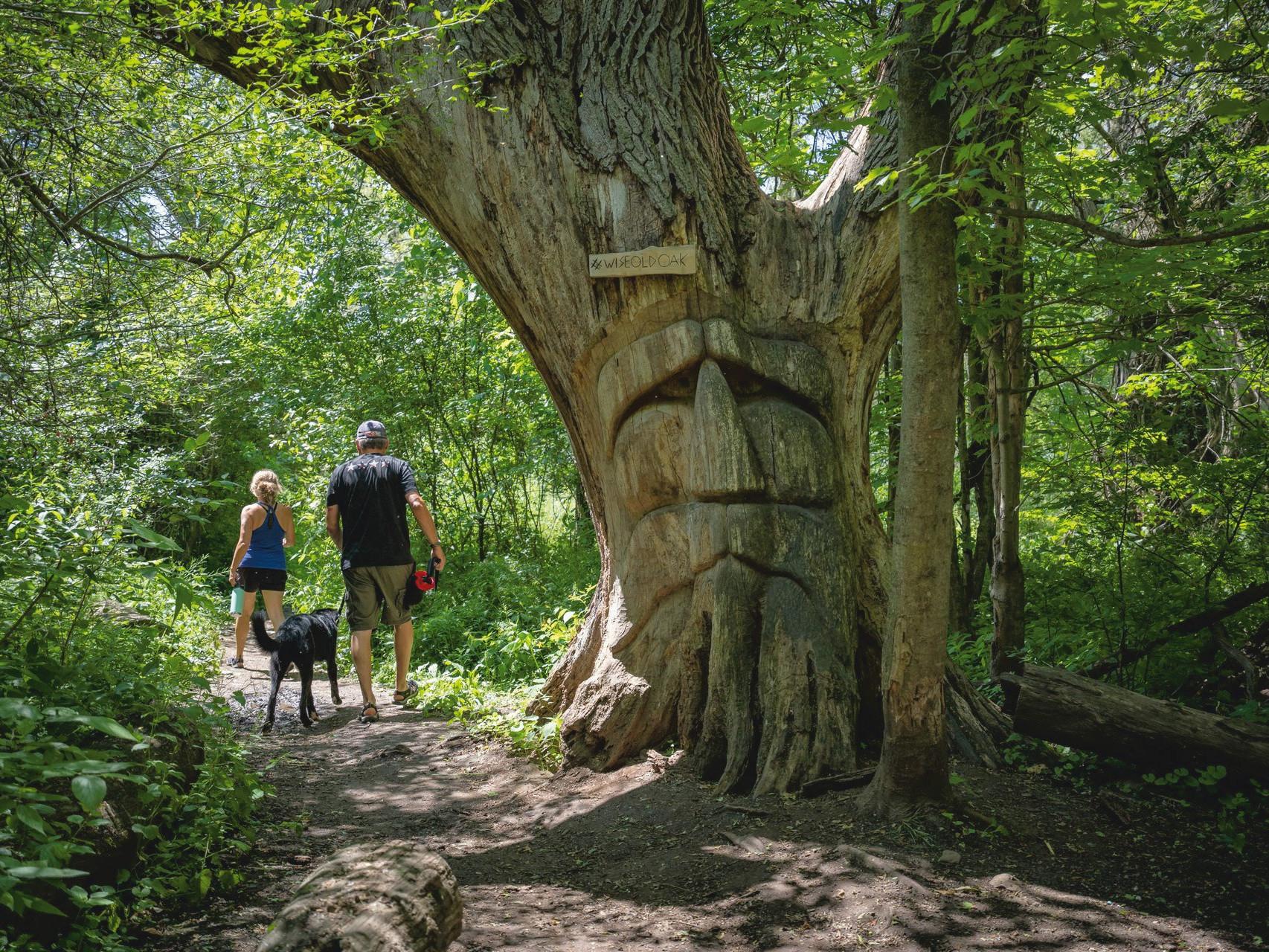 waterloo region cambridge kitchener hiking trails